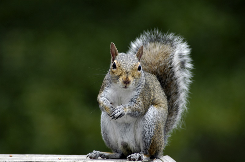 Squirrels Are Driving Me Nuts